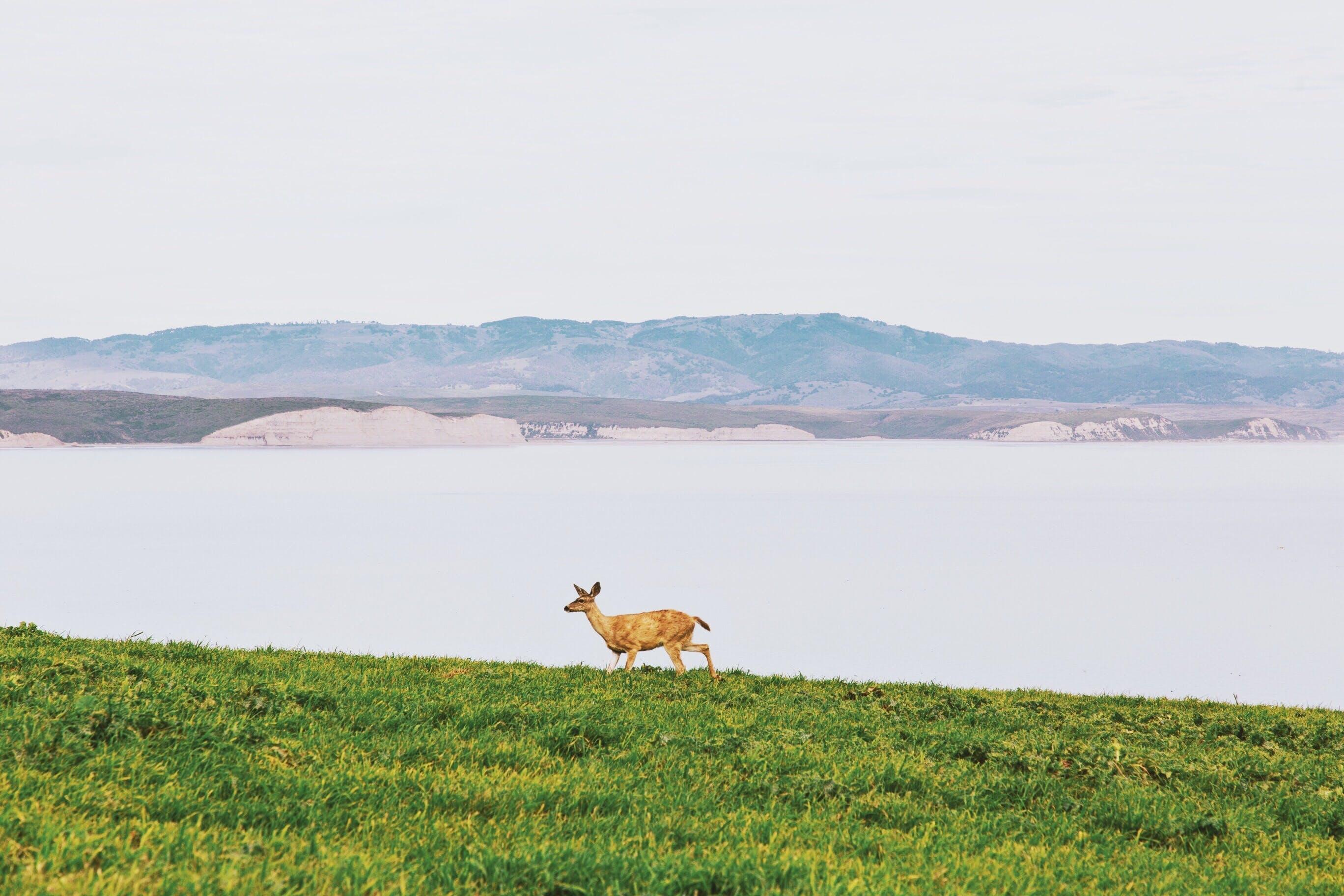 Free stock photo of nature, water, field, animal