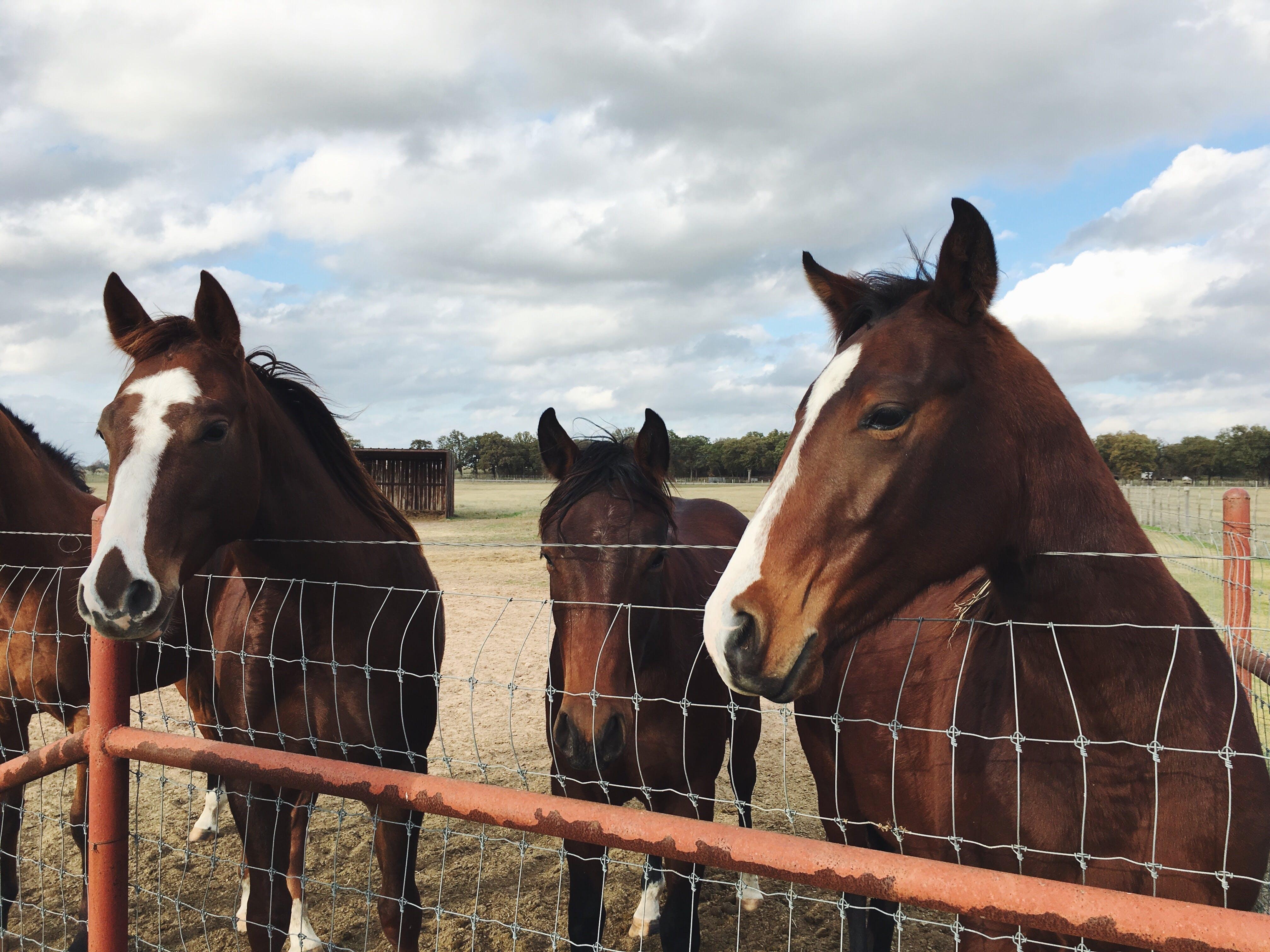 Free stock photo of field, farm, animals, fence