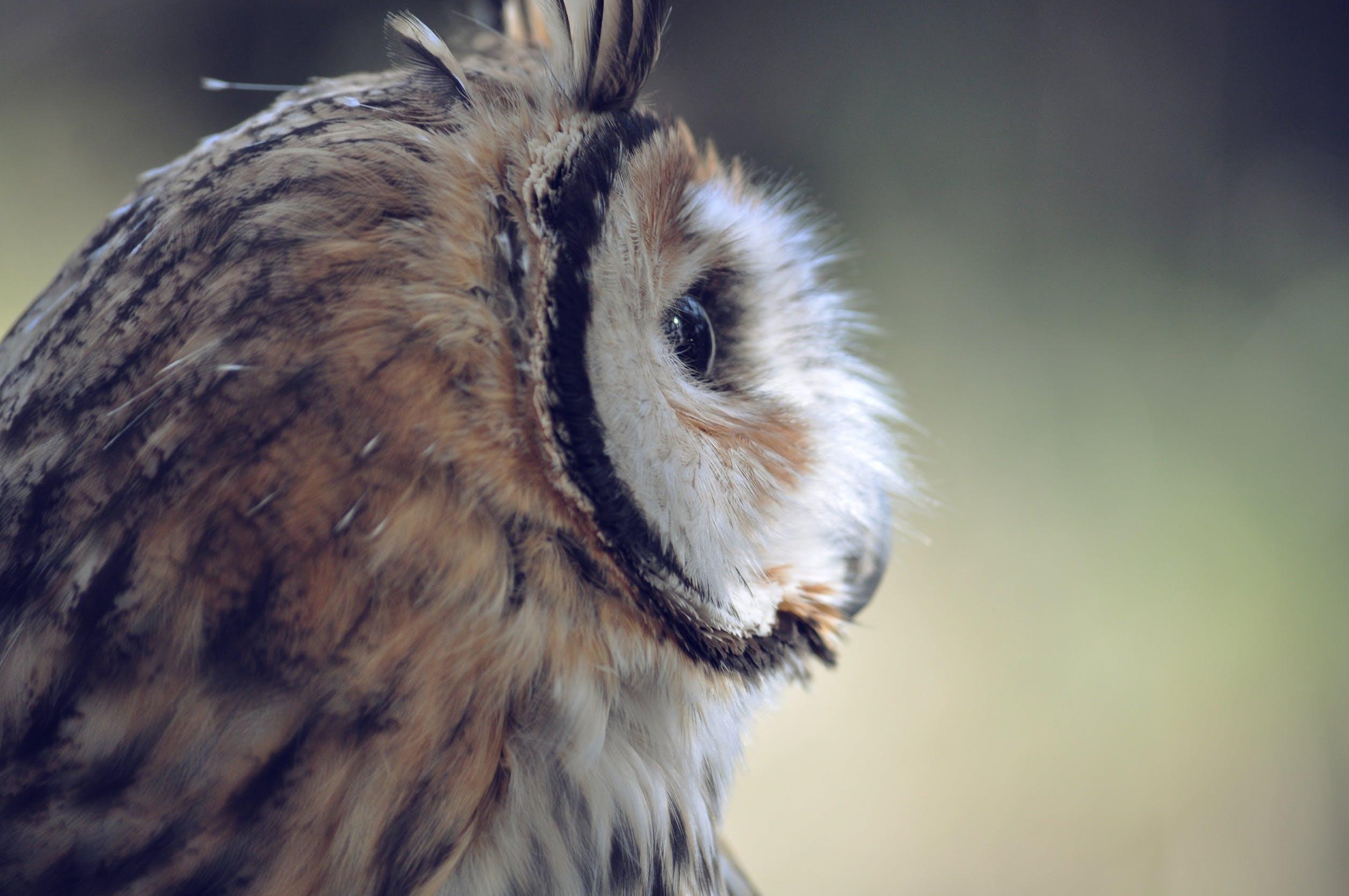 Free stock photo of animal, bird, face, feathers