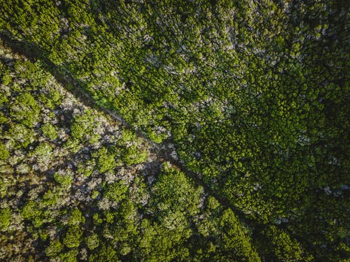 Green tropical grass on uneven land