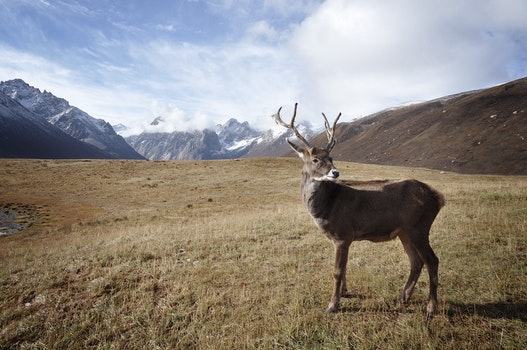 Brown Deer Standing on Field during Daylight
