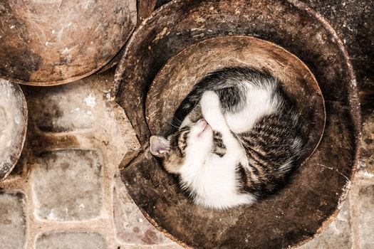 Black and White Long Coat Cat Sleeping on Brown Container
