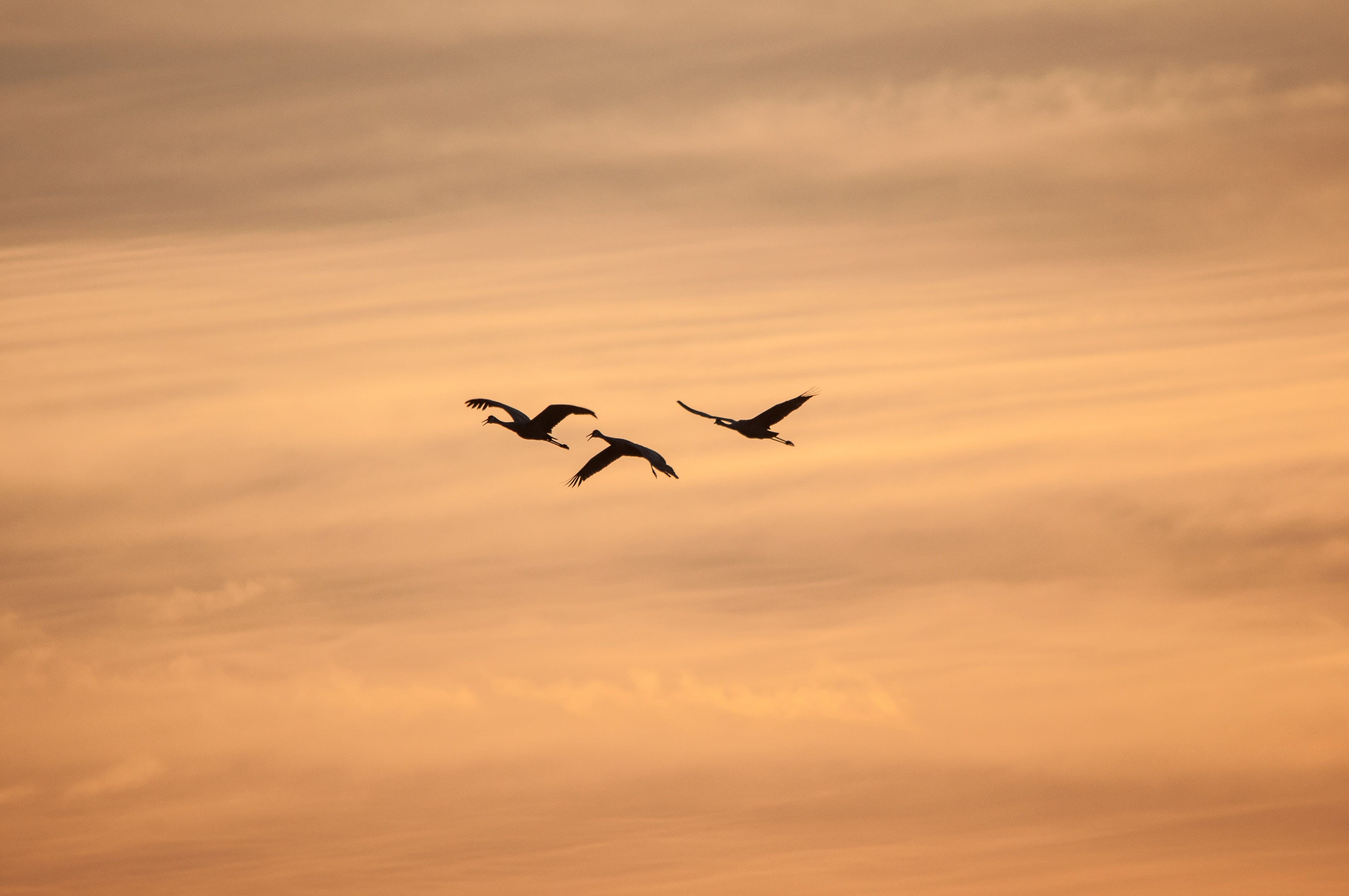 3 Black Bird Flying
