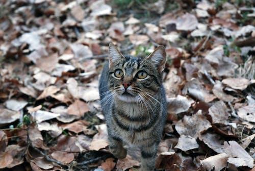 Brown Tabby Cat on Dried Leaves