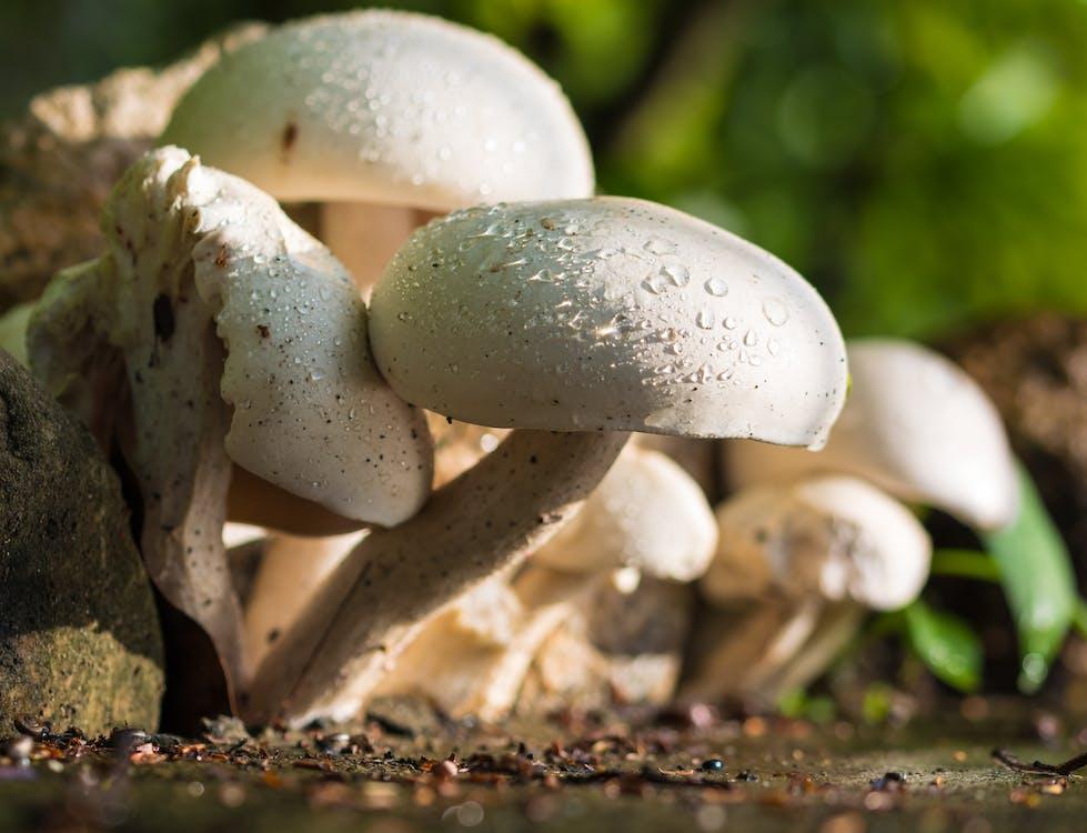 Beige Mushrooms on Focus Photo