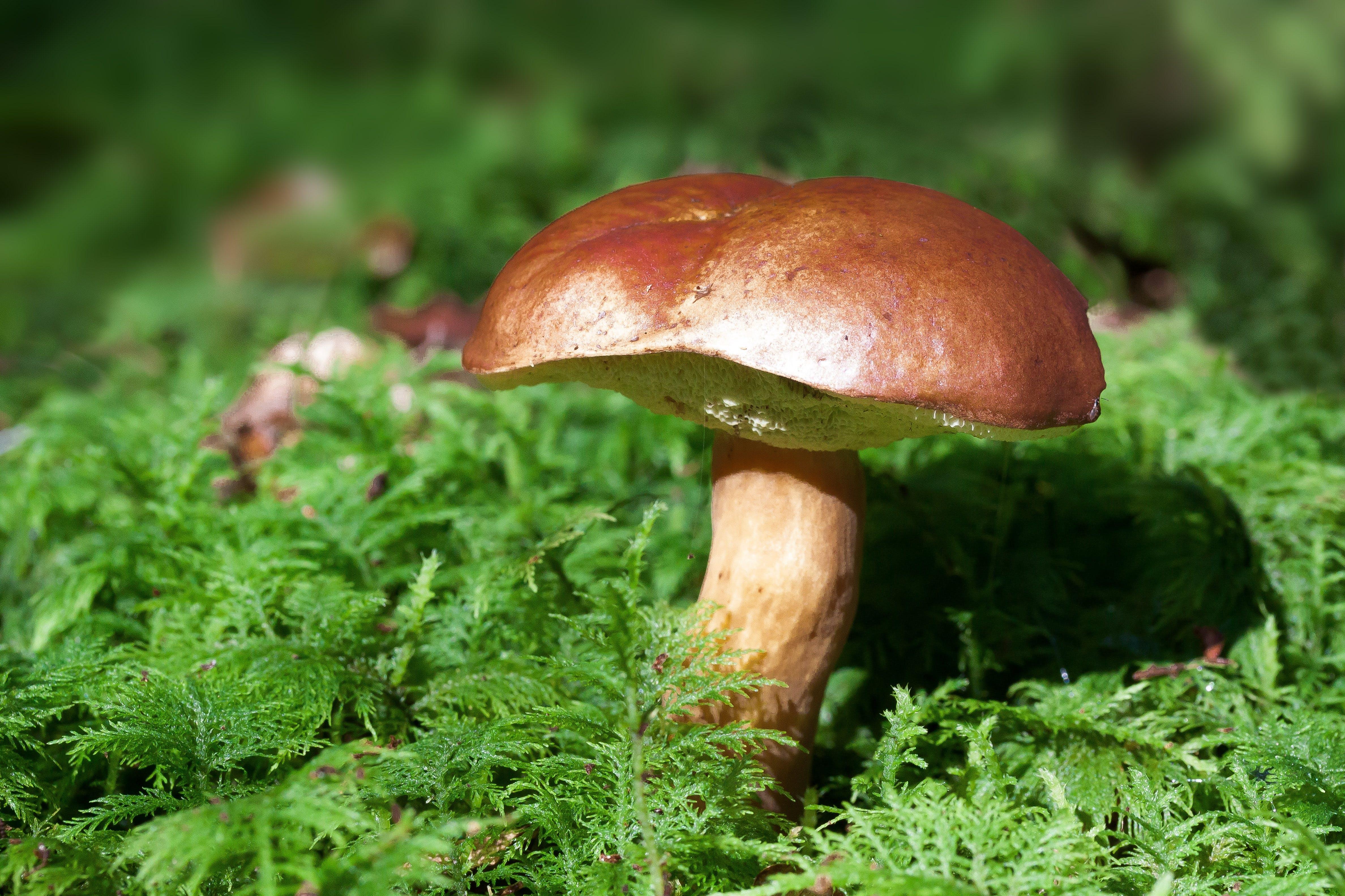 Brown Mushroom on Green Leaf Plant during Daytime
