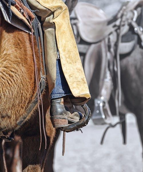 Fotos de stock gratuitas de botas, caballo, cuero, ensillar