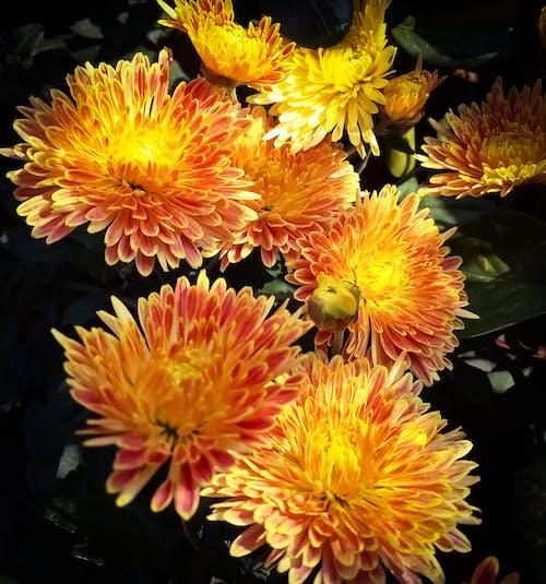 Foto stok gratis abstrak, alam, baru, bunga yang indah