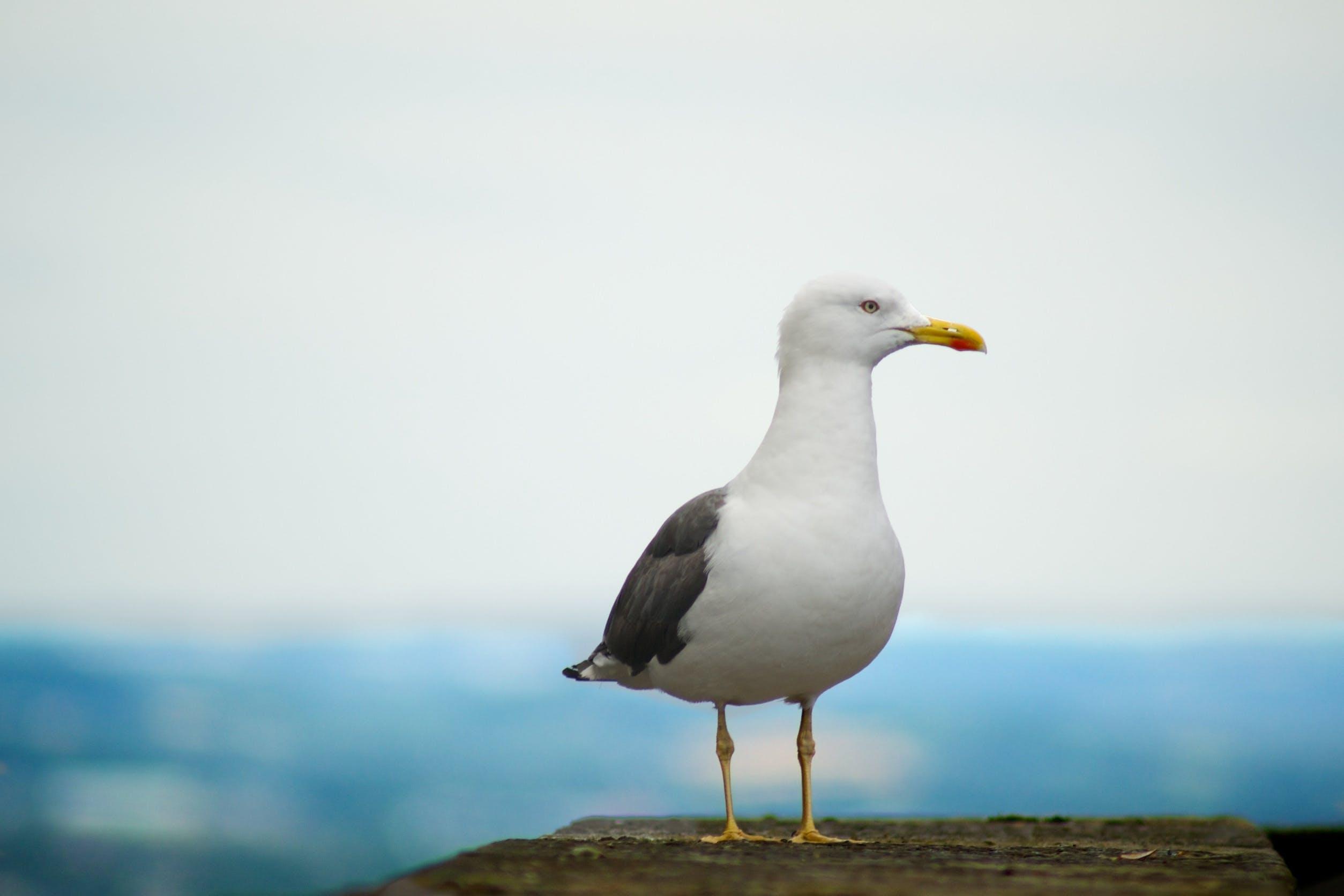 avian, beak, blur