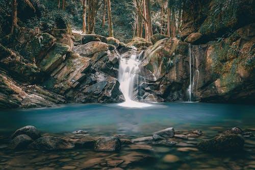 Základová fotografie zdarma na téma barevný, cákání, čerstvý, design