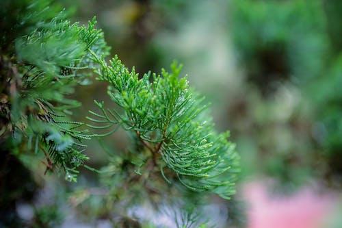 Green pine tree growing in daylight