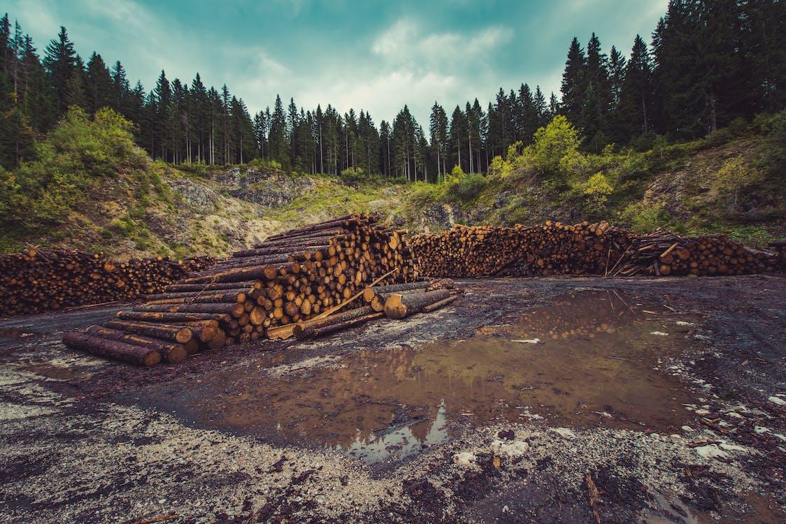 deforestation, environment, forest