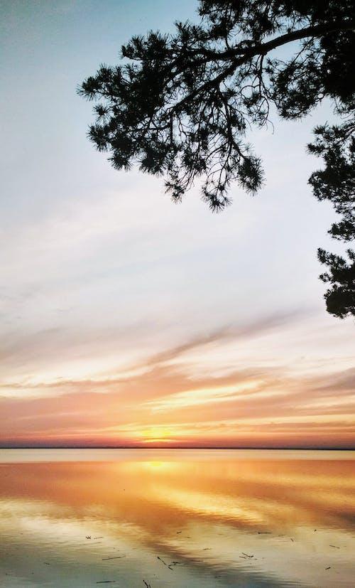 açık hava, ağaç, akşam içeren Ücretsiz stok fotoğraf