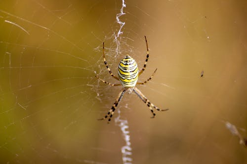 Yellow and Black Spider on Web