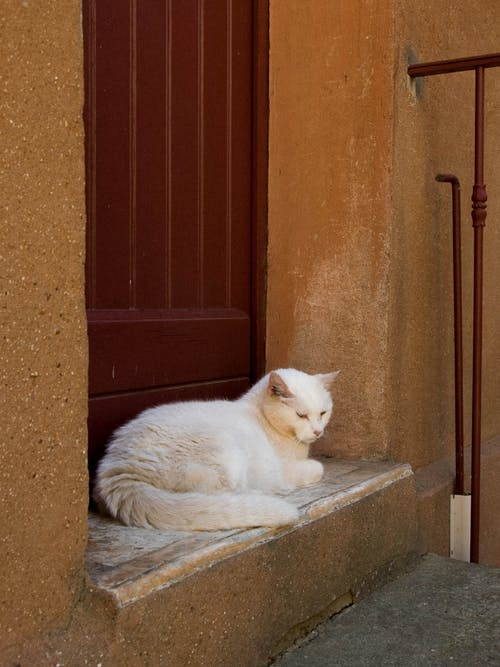White Cat Lying on Concrete Bench