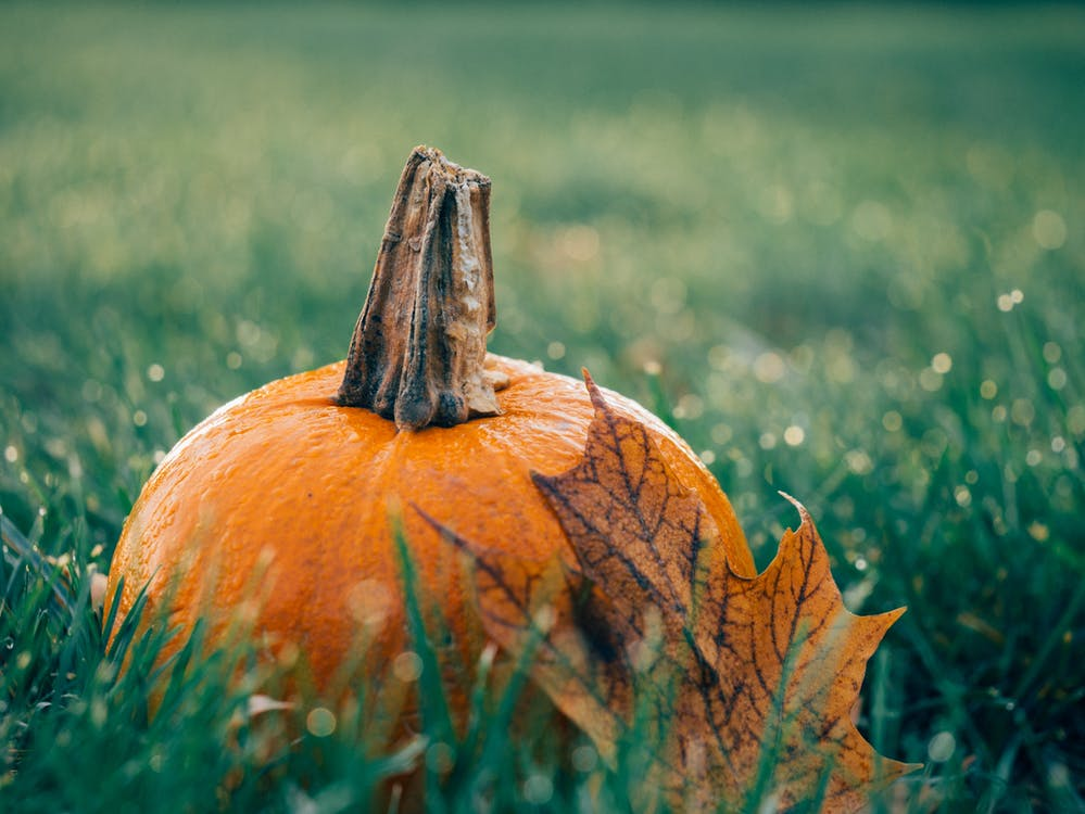 Pumpkin on Green Grass