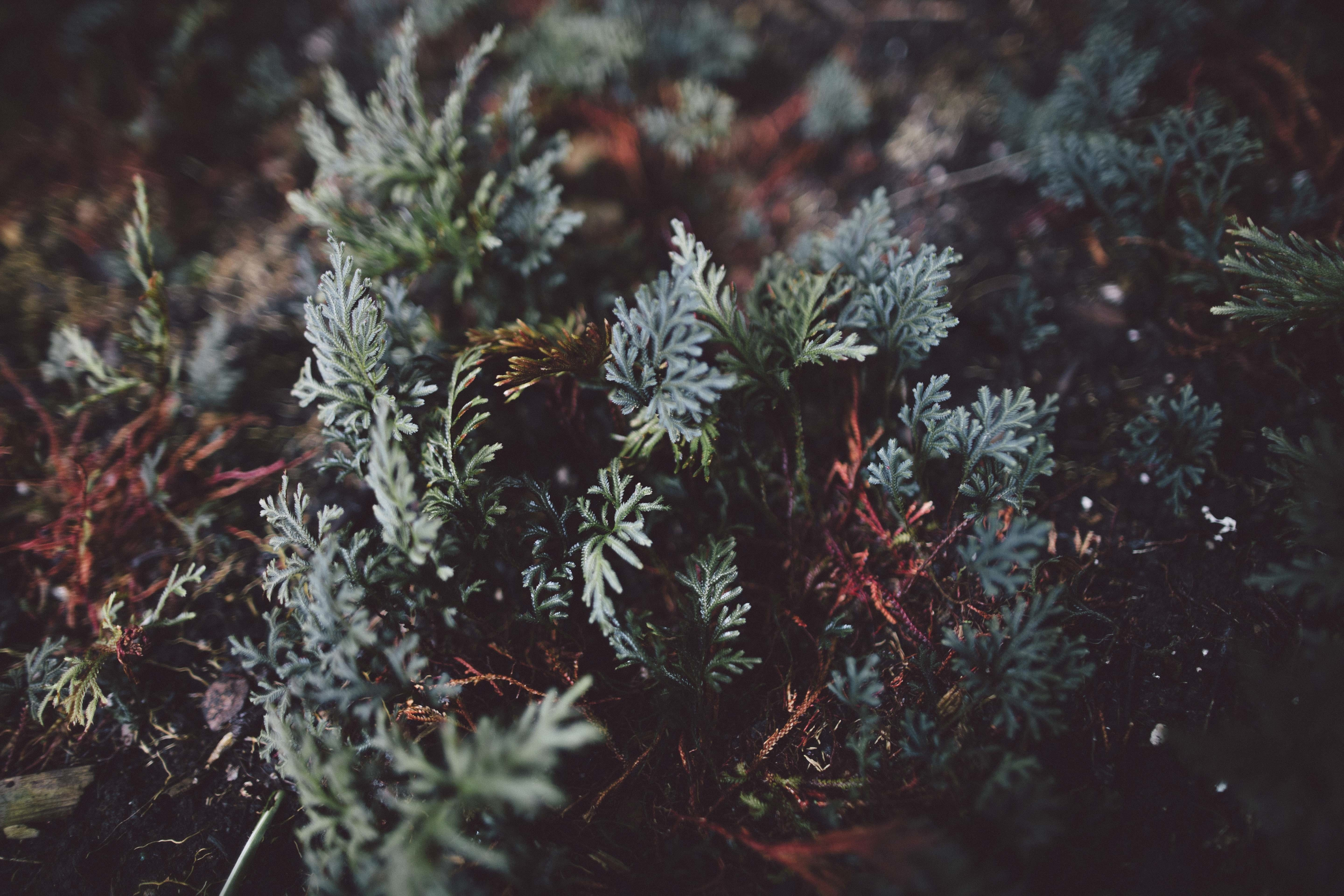 Free stock photo of nature, garden, plant, leaves