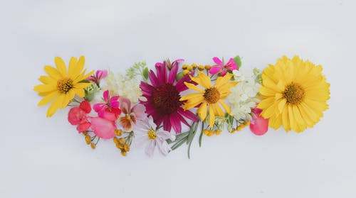 Flower composition with fresh gerberas on white background