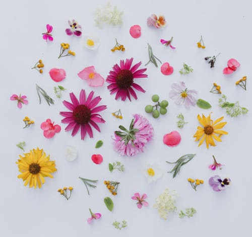 From above composition of different colorful flower heads and petals scattered on white background
