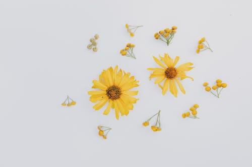 Kostenloses Stock Foto zu anordnung, aroma, aromatisch