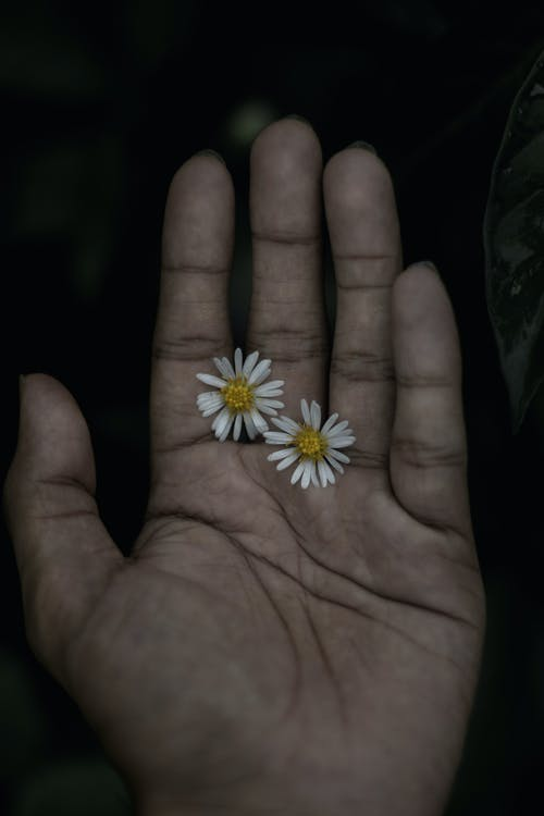 Yellow and White Flower on Persons Palm