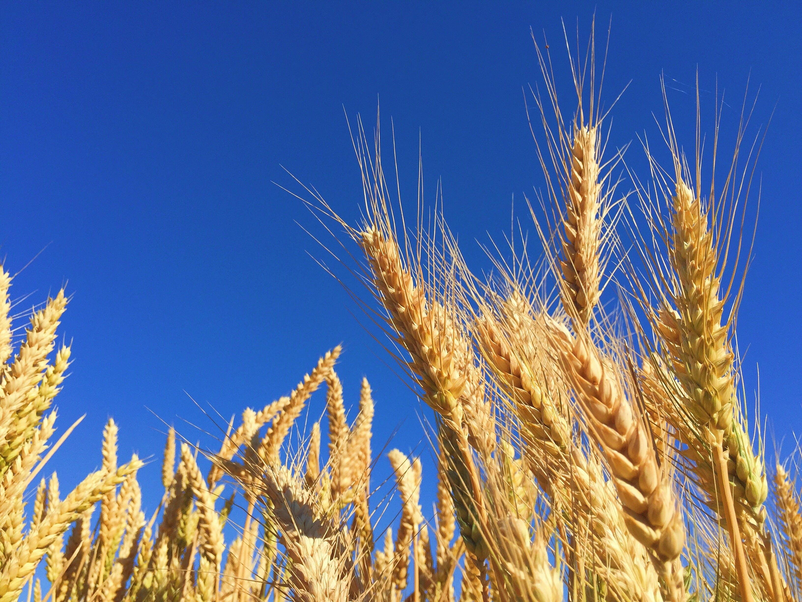 Free stock photo of healthy, nature, sky, farm