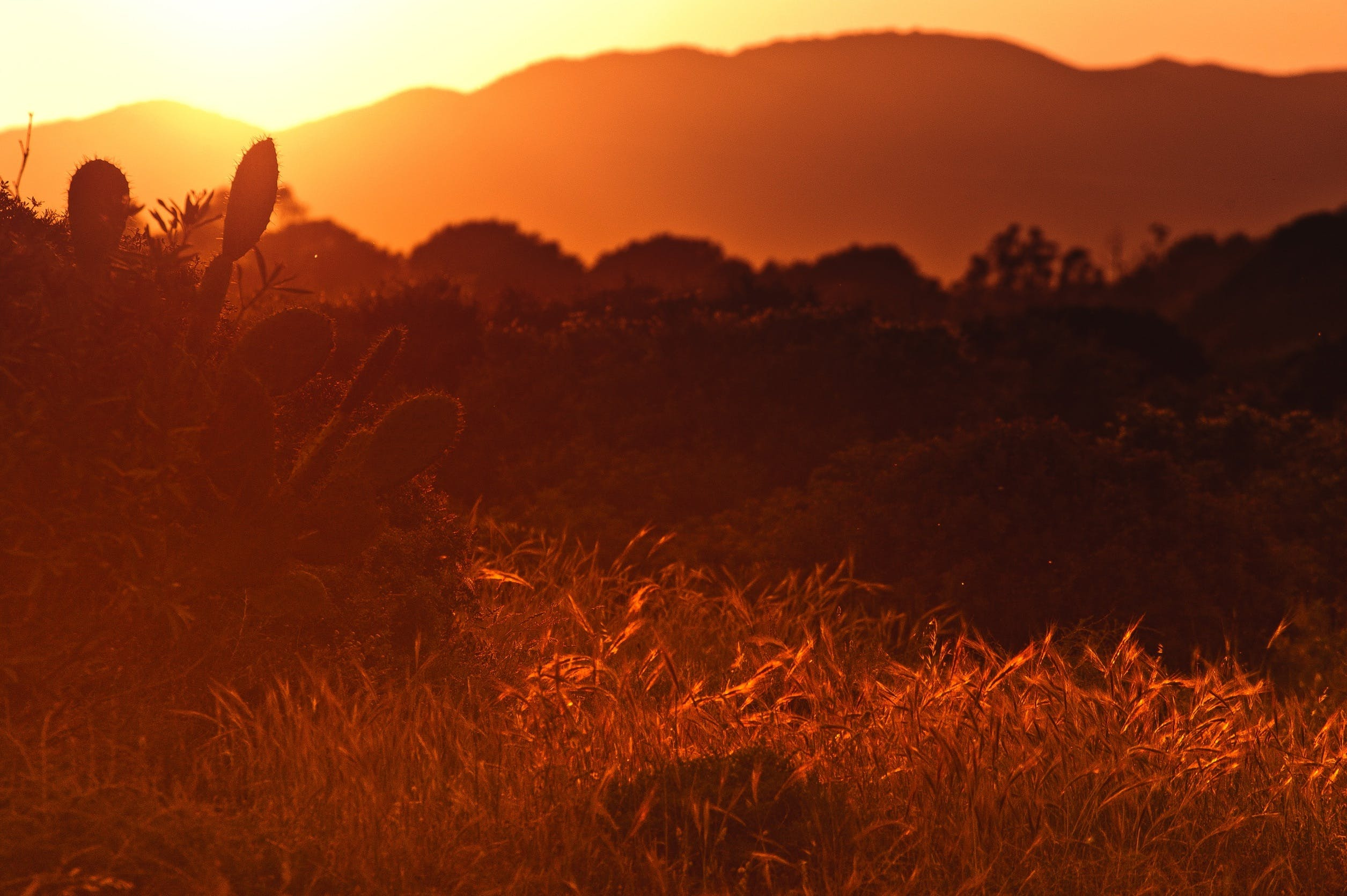 Free stock photo of light, landscape, sunset, sun