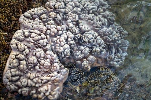 Soft underwater coral on seashore in Vietnam