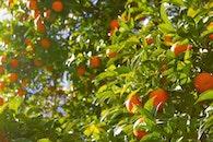 agriculture, farm, fruits