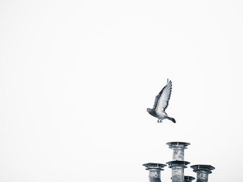 White Bird Flying over City Building