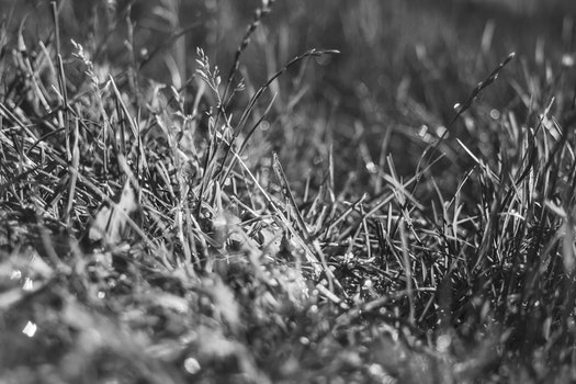 Free stock photo of black-and-white, nature, field, agriculture