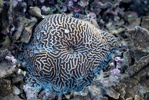 Spheroid brain coral on sea bottom