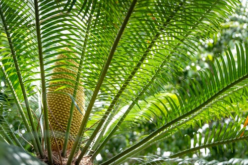 Verdant palm branches in sunny rainforest