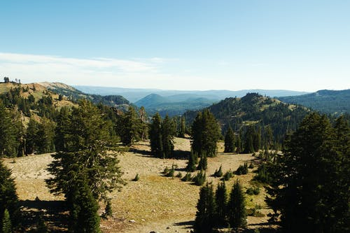 Picturesque landscape of coniferous trees growing on mountains slopes