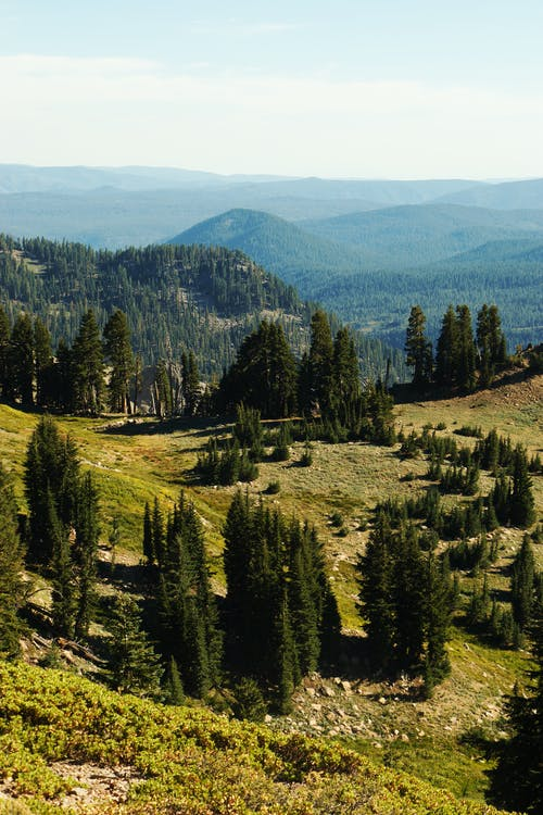From above of spruce trees growing on green hilly meadow in mountainous valley on sunny day