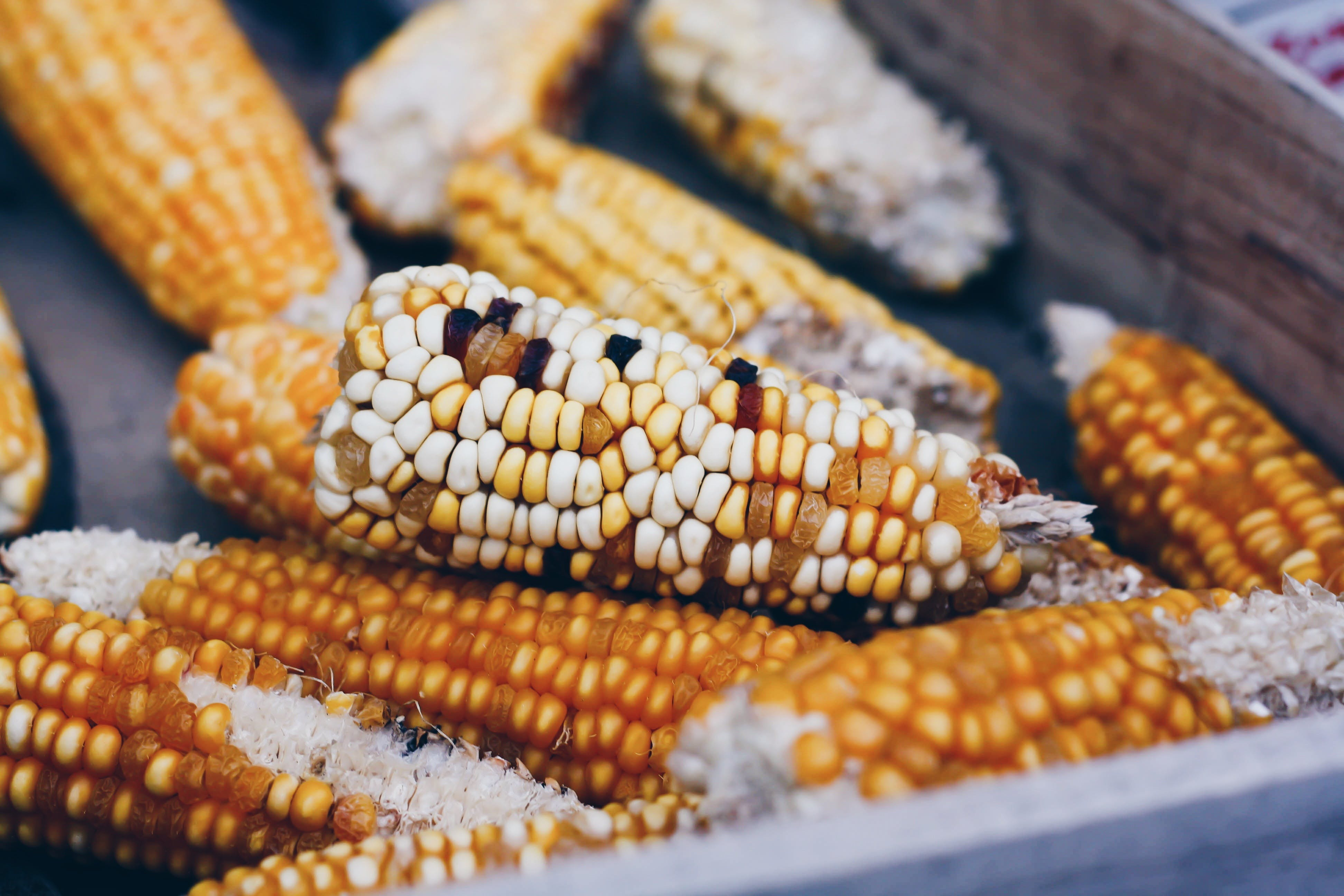 Free stock photo of food, healthy, corn, market