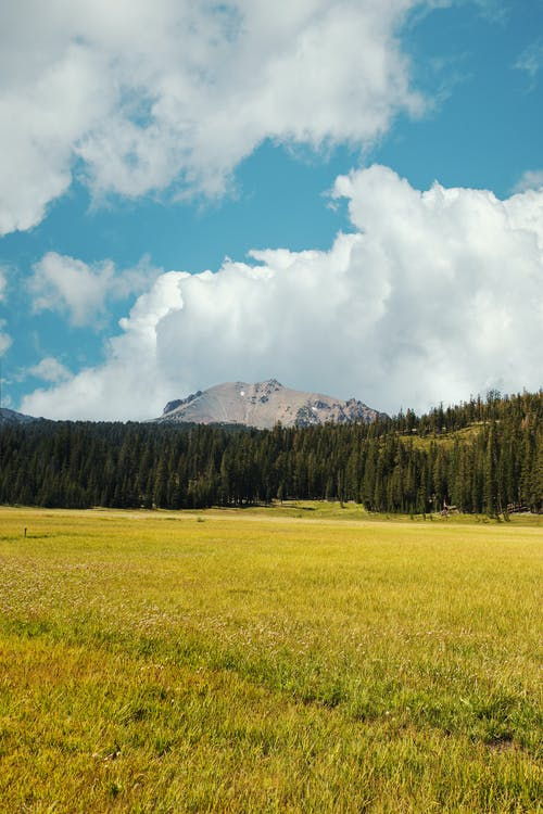 Picturesque scenery of grassy meadow with coniferous trees and rocky mountains under cloudy blue sky on sunny day