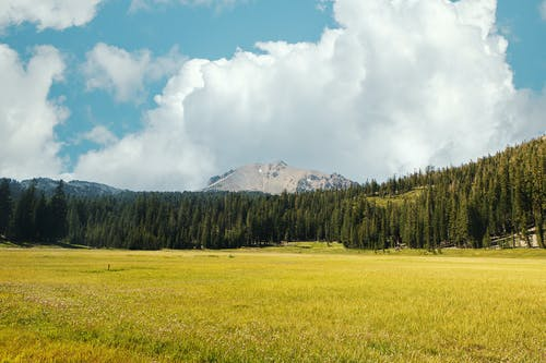 Meadow with green grass surrounded with forest and rough mountain