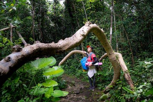 Fotos de stock gratuitas de admirar, al aire libre, árbol