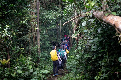 Group of tourists walking through tropical forest