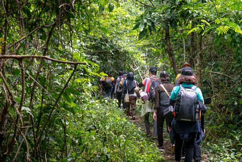 Back view of unrecognizable backpackers strolling on pathway between lush greenery in tropical woods