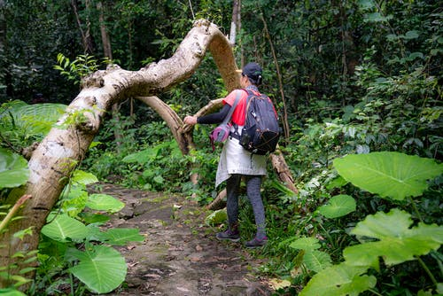 Back view of anonymous female traveler walking on footpath between tropical trees and bushes in forest