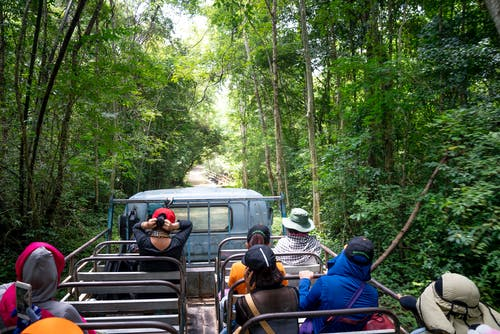 Travelers exploring green exotic woods in truck