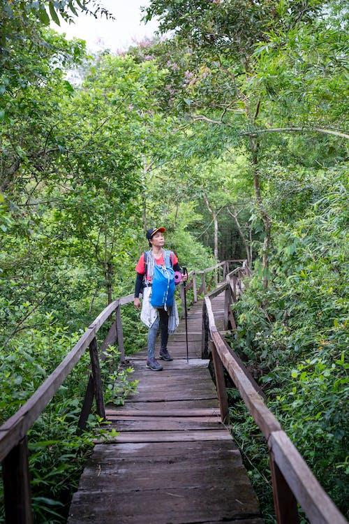 Hiker standing on wooden bridge