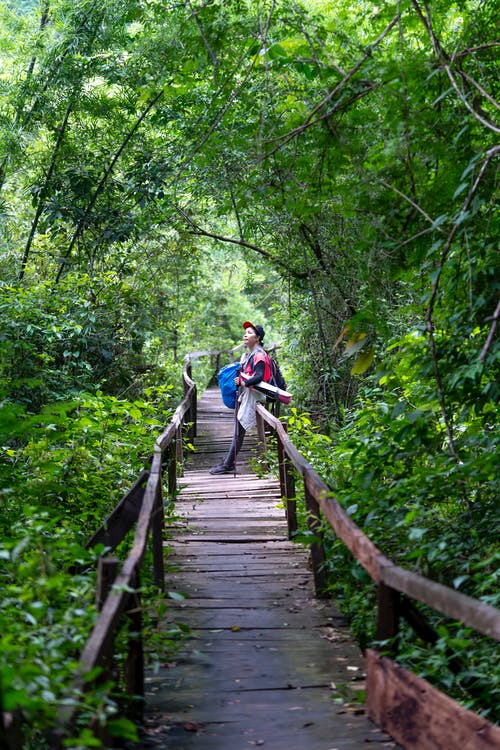 Full body of distant unrecognizable hiker standing on wooden footbridge between forest with lush foliage on branches of trees in nature