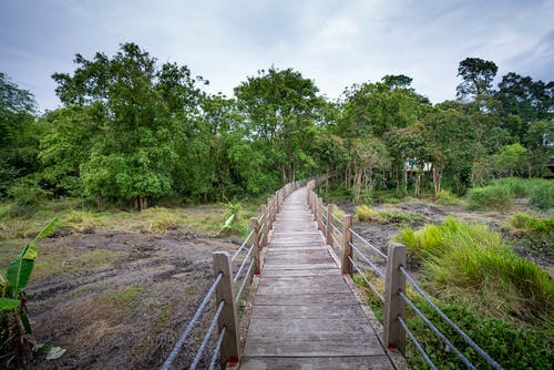 Narrow footbridge with railings between green bushes and lush trees with foliage growing in national park in forest in summer time