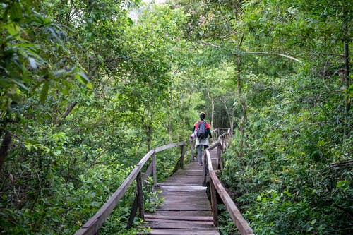 Back view of distant anonymous hiker with backpack strolling on wooden walkway with railings among lush green rainforest in nature