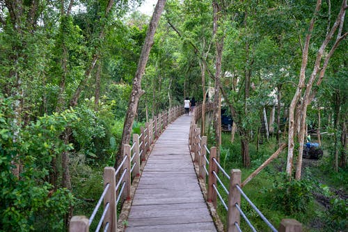 Wooden footpath among tropical trees