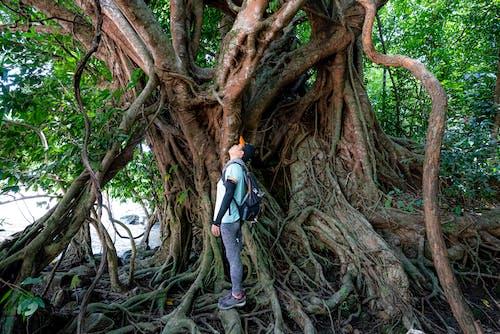 Fotos de stock gratuitas de activo, alto, árbol