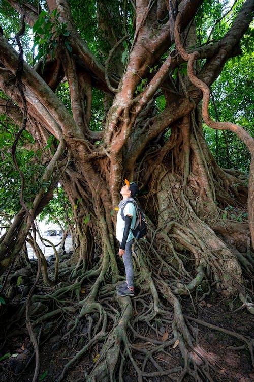 Traveler standing near tree trunk